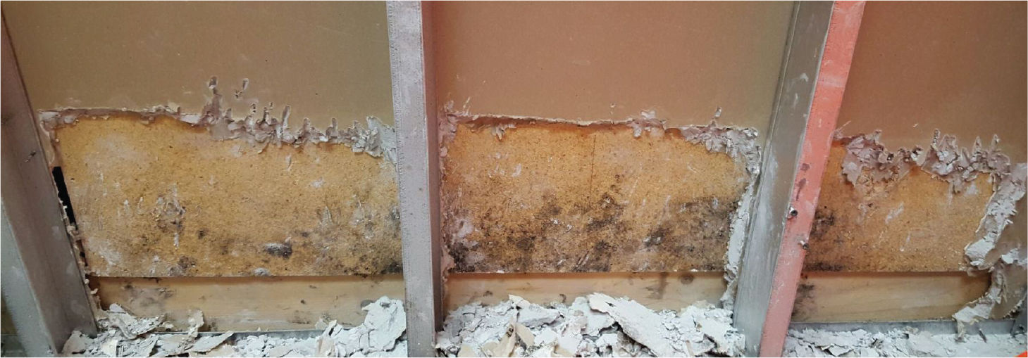 Mould Removal Company, Mould Removal Services Calgary